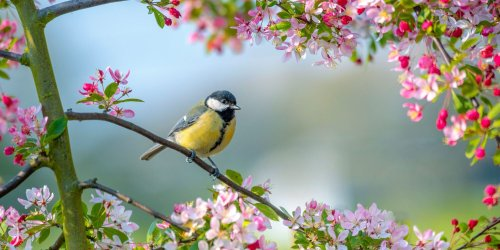 Bird Feeders for Attracting the Most Beautiful Feathered Friends To Your Yard