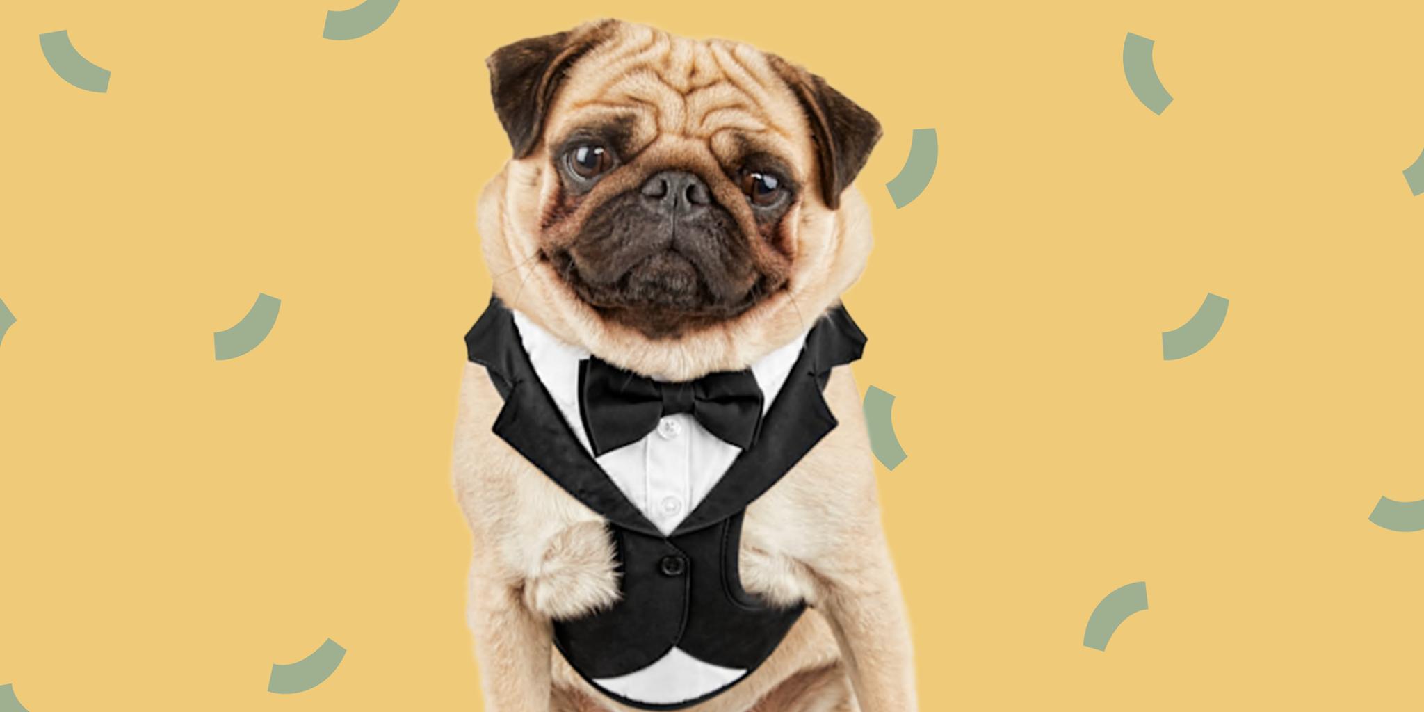 I Do, Too! Adorable Pet Wedding Attire for Your Furry Friend