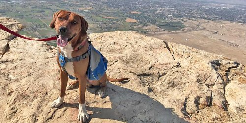Shelter Goes Above and Beyond to Save This Rhodesian Ridgeback's Life