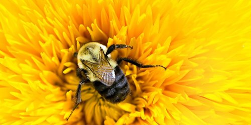 33% of Our Food Would Disappear Without Bees—Here Are 4 Simple Ways to Help
