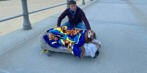 Pet Owners Make Mobile Bed for Their 16-Year-Old Dog to Help Canine Enjoy Last Beach Vacation