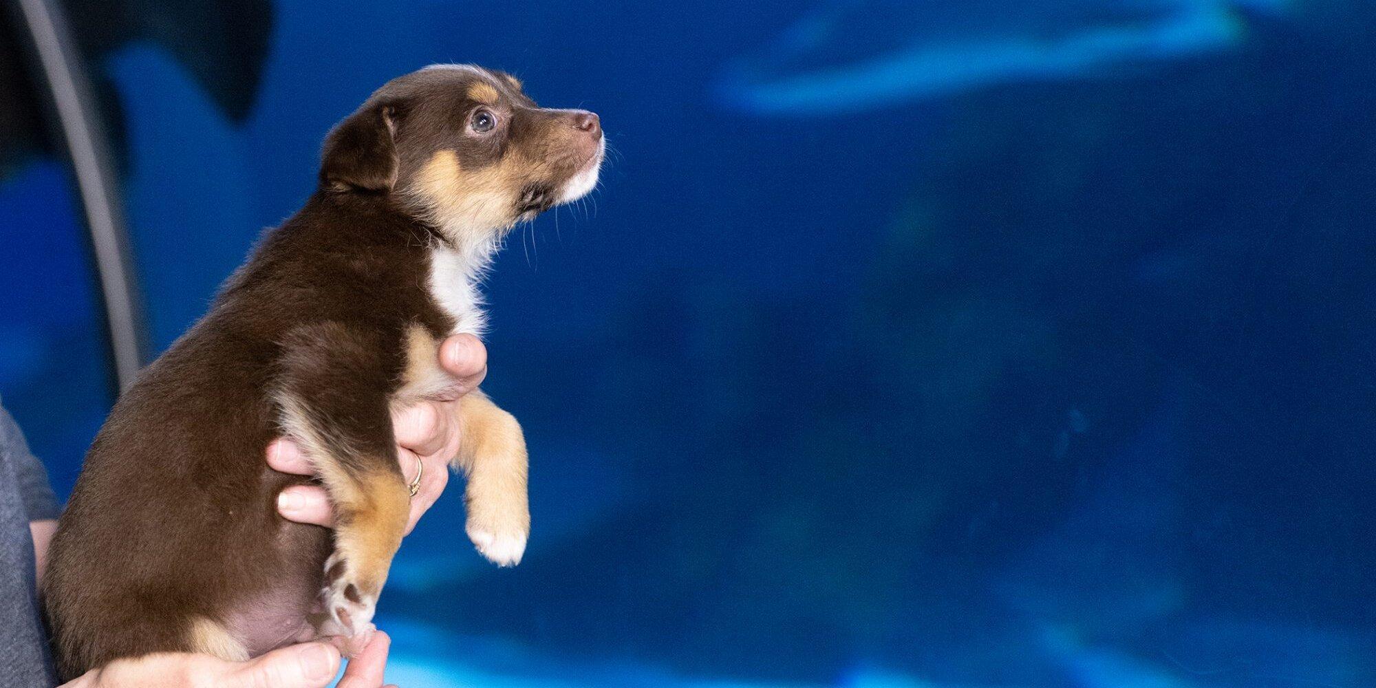 Precious Pups Visit the Aquarium and Meet New Friends Along the Way