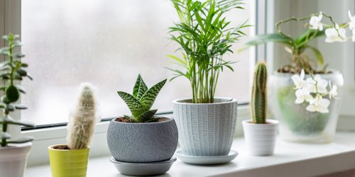 Six Houseplant Mistakes to Avoid This Winter