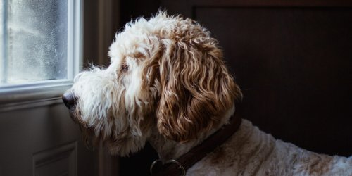 5 Tips for Preparing Your Dog For Your Return to Work After a Year at Home