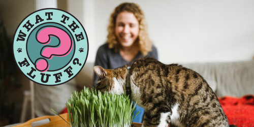 Why Cats Eat Grass & How to Satisfy Their Appetite Indoors