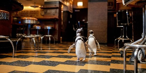 Penguins Crashed a Seafood Restaurant in Chicago and the Photos Are Just As Hilarious As We'd Hoped