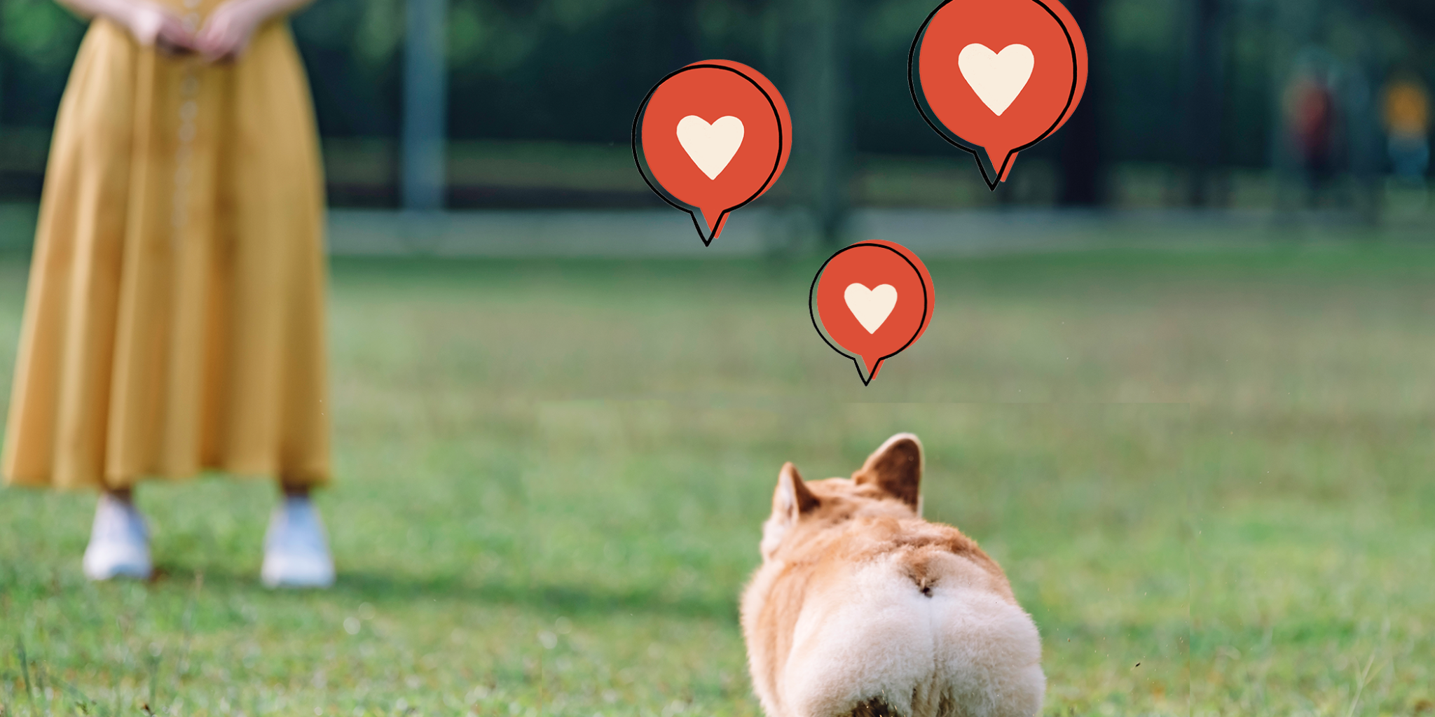 13 Corgi Butts That Will Drive You Absolutely Nuts
