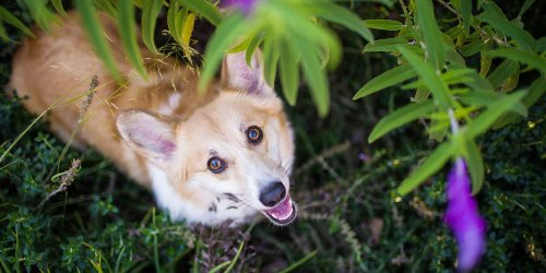 Watch Out for These 6 Spring Pet Safety Dangers