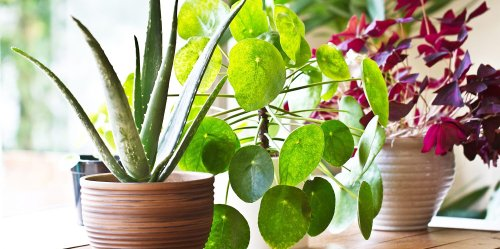 How to Water Your Plants When You Go Away