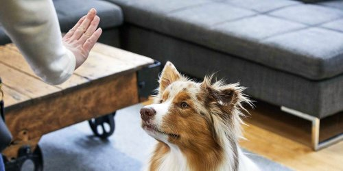 How to Teach a Dog to Stay Using Positive Reinforcement