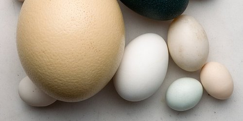 A Guide to All the Different Types of Eggs to Use for Decorative Projects