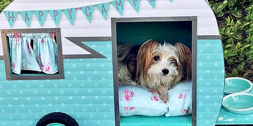 These Are the Coolest Doghouses on Instagram
