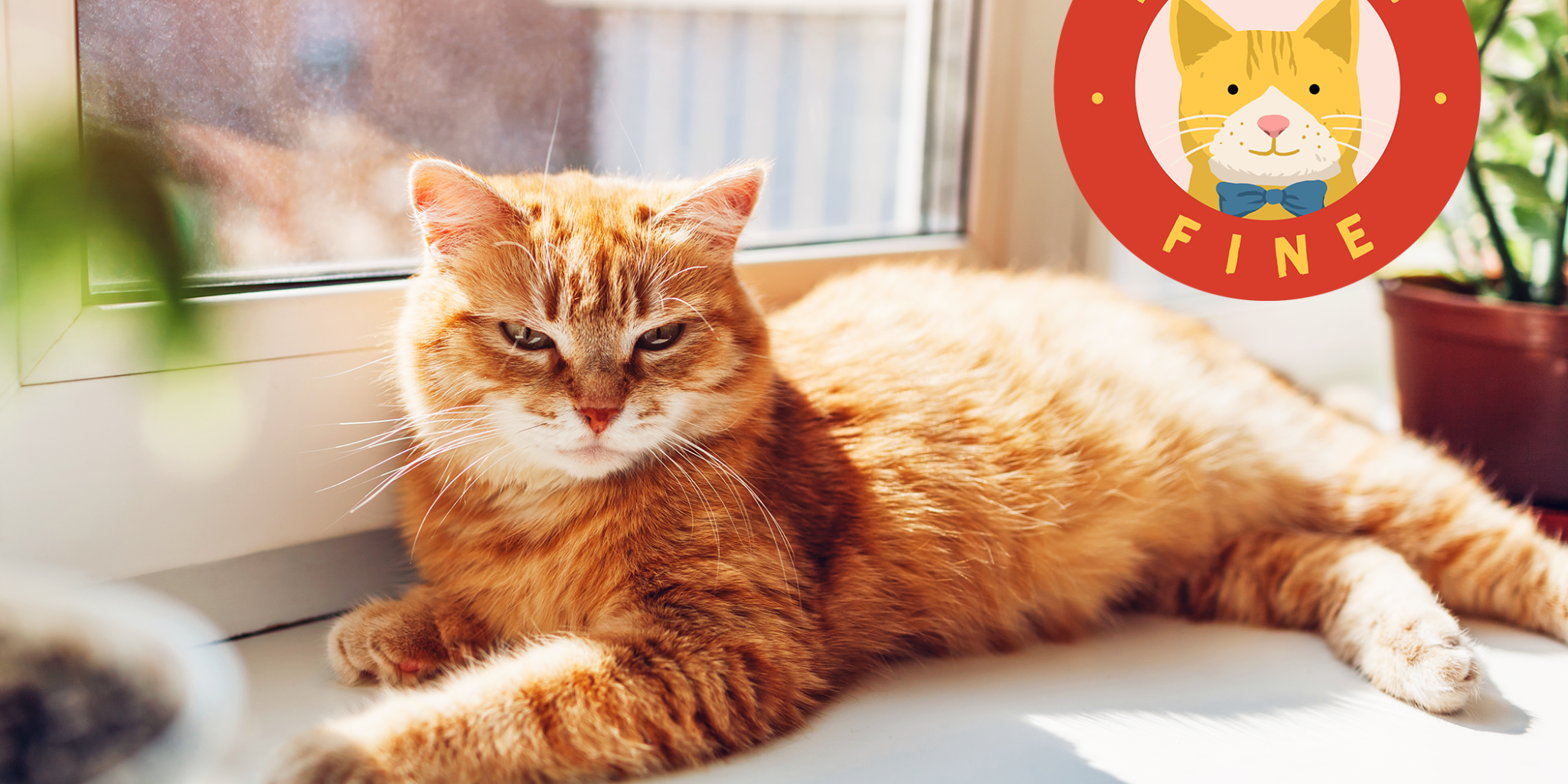 How to Protect Your Cat From Getting a Sunburn