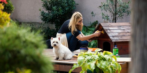 10 Things You Should Know About Building an Outdoor Doghouse