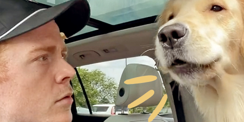 Watch This Golden Retreiver Teach Her Dad Who Actually Belongs on the Bed
