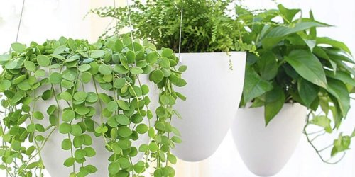 The Best Outdoor Hanging Planters to Let Your Backyard Shine
