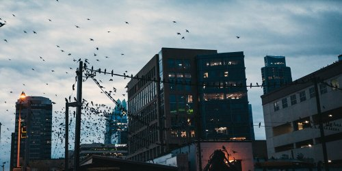 Austin Businesses Are Turning Off Lights to Help Migrating Birds