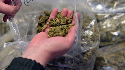 Legalisierung von Cannabis könnte zu mehr Drogenkriminalität führen