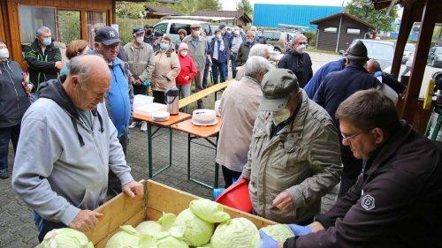 Großer Andrang beim Krauthobeln des Isartaler Kleingartenvereins – 2,6 Tonnen Kohl