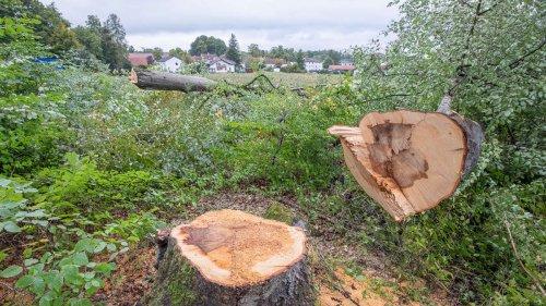 Baumschutz in Starnberg dreht noch eine Runde