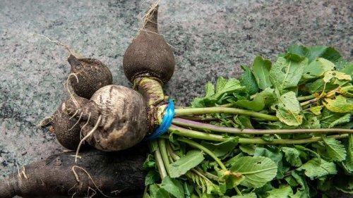 Husten-Hausmittel aus der Natur: So machen Sie Schwarzen-Rettich-Sirup ganz einfach selbst