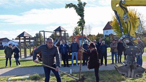 Kirschblüte wie in Japan: Allershausen startet eine blühende Aktion