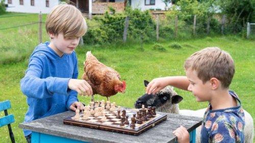Bessere Noten: Kinder und Jugendliche lernen beim Schach taktisches Denken