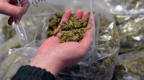 Ampel-Koalition prüft Legalisierung von Cannabis - Für die Staatskasse wäre das ein Segen
