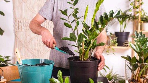 Schimmel auf der Blumenerde: Diese Tipps helfen den Pilzrasen im Blumentopf zu beseitigen