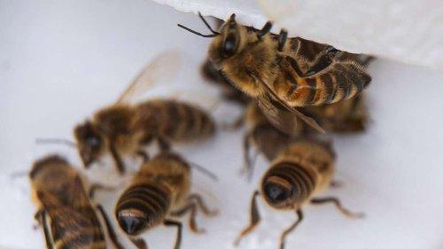 Da freuen sich die Bienen: Herbstbepflanzung auf dem Balkon und im Garten