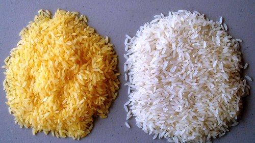 """""""Goldener Reis"""": Philippinen genehmigen kommerzielle Produktion von gentechnisch verändertem Produkt"""