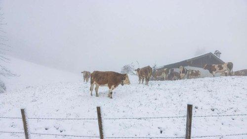 Jede Menge Schnee in Oberbayern - auch Skigebiet im Allgäu von Neuschnee überzogen
