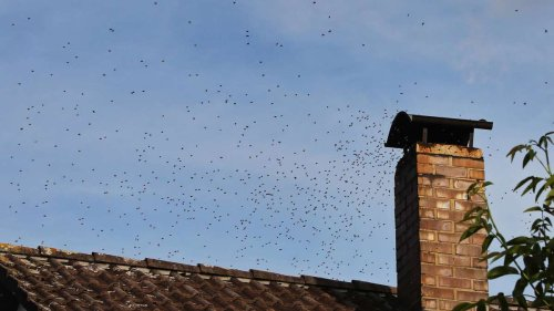 Bienen im Kamin: Rentner (84) will Schwarm mit Ofenrauch vertreiben - Schuss geht nach hinten los