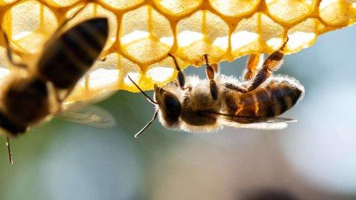 Wenig bis gar kein Honig