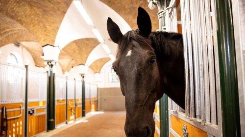 Pferderipperschlägt in Nürnberg zu: Halterin lebt in Angst - Peta zählt 250 Tatorte in Deutschland