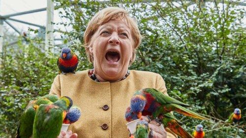 Merkel von Vogel-Invasion überrascht - Kanzlerin wird gebissen und verliert völlig die Fassung