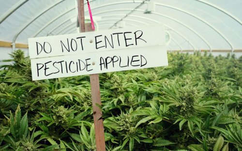 Man Gets Majorly Busted for Smuggling Illegal Cannabis Pesticides into US From Mexico