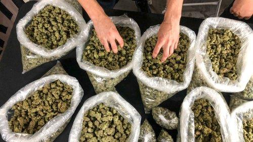 California Is the Plug for Illinois' Billion Dollar Illegal Weed Market