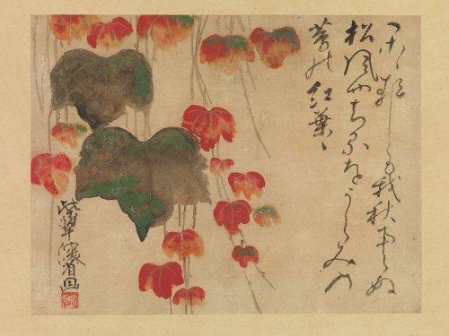Autumn Ivy after 1732