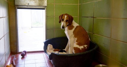 'Britain's loneliest' dog needs a home after 450 days in kennels