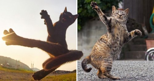Photographer captures cats in their ultimate ninja state