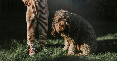 How to spot and treat hay fever in dogs