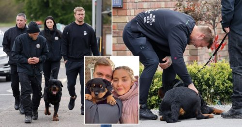 Dan Osborne picks up huge guard dog he and Jacqueline Jossa visited amid lockdown as a puppy