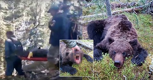 Bear eats boy, 16, at national park before tourist stabs its neck with penknife