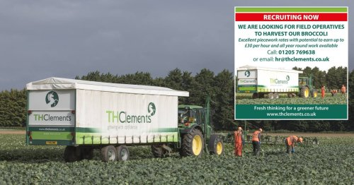 Cabbage pickers offered £62,000 salary by firm amid national staff shortage