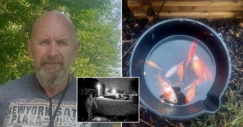 Man 'poured disinfectant into pond' killing grandad's prized koi and goldfish