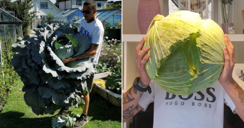 Dad grows giant vegetables to feed his local hospice