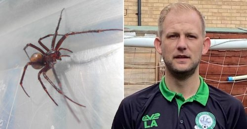 Football coach nearly died after thinking false widow spider bite was a blister