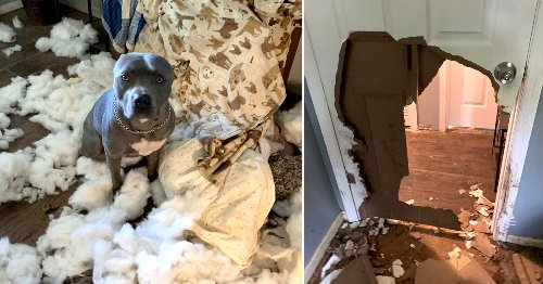 Dog left home alone smashes through a door and destroys a sofa