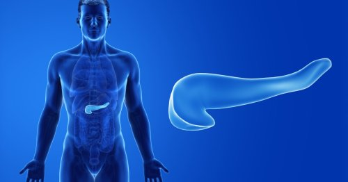 What is the role of the pancreas, do you need one and what are symptoms something is wrong?